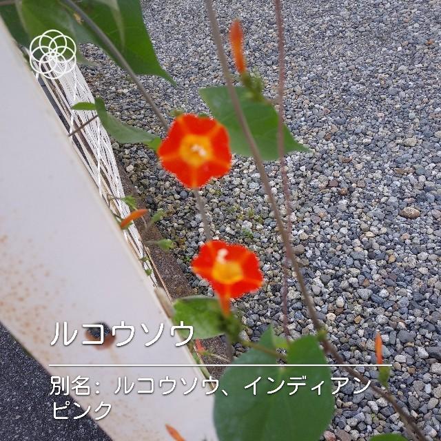f:id:inamorato:20211003102139j:image