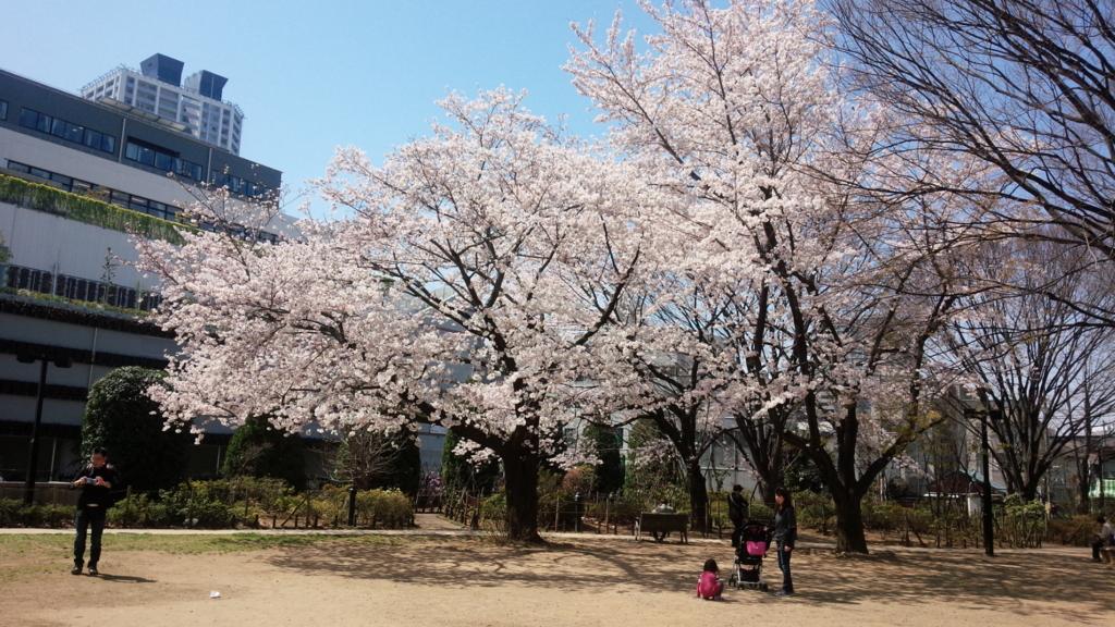 練馬文化センター近くの桜