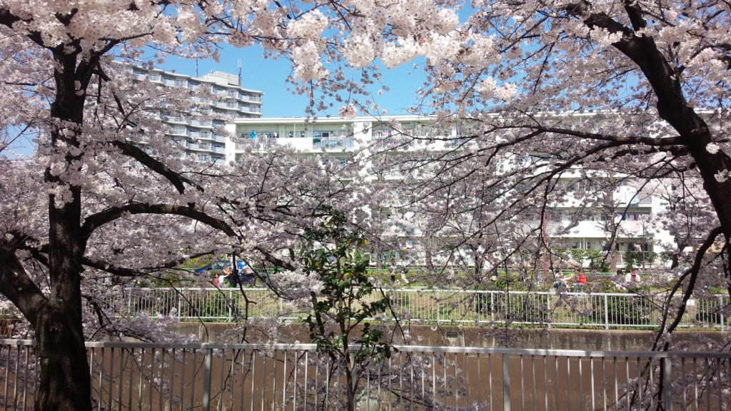 練馬高野台 石神井川の桜 君嘘聖地