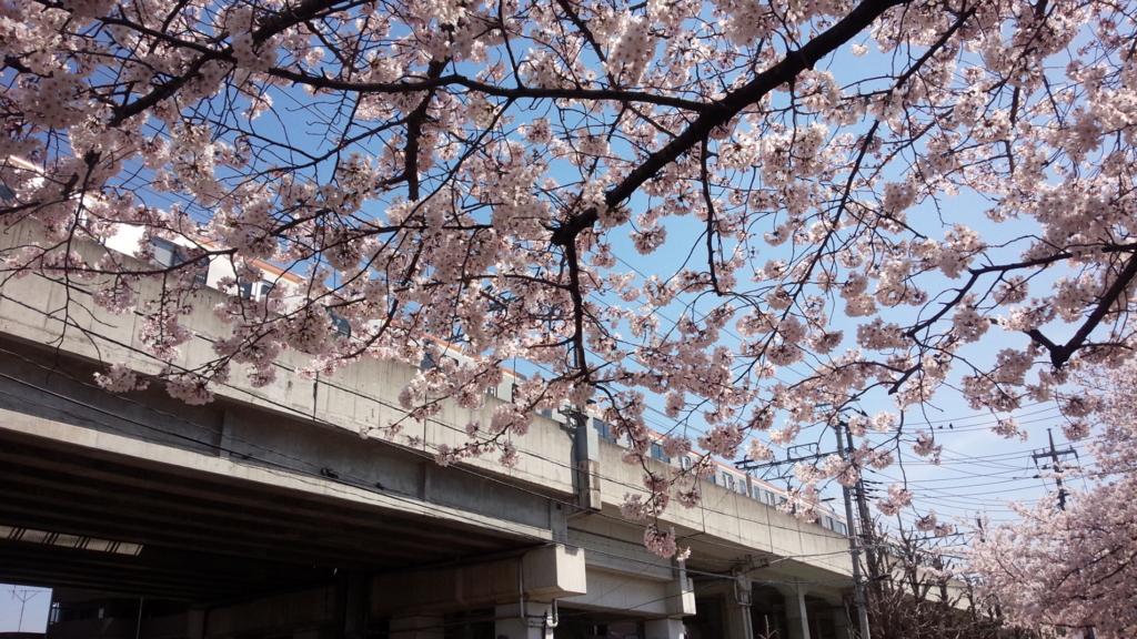 西武線と練馬高野台の桜