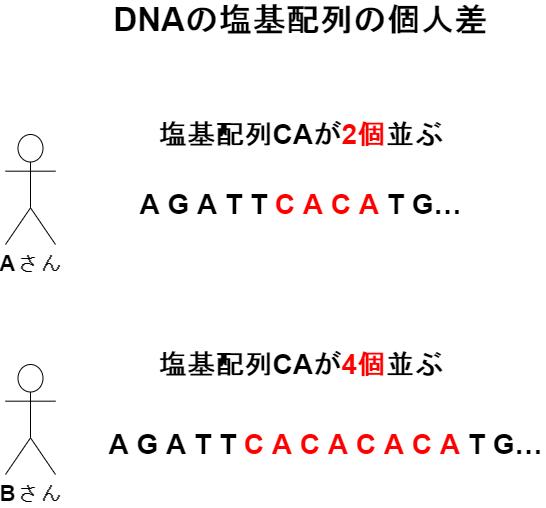 生きるものに魅せられて  DNA鑑定はどのように行われるのか? PCR法とは?
