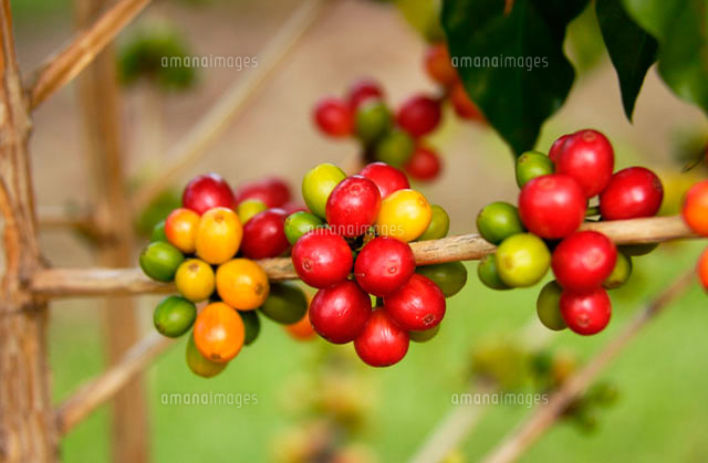 f:id:indo-coffeeholic:20190620230740j:plain