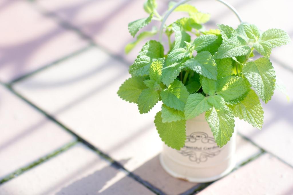 おしゃれな部屋を演出する観葉植物