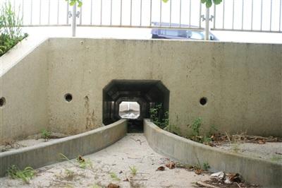 沖縄の道路にはカニのためのトンネルがある