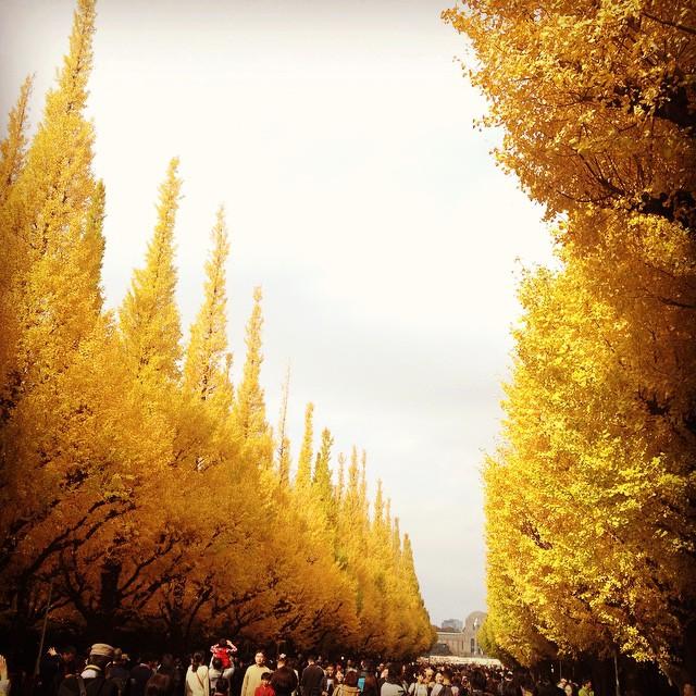 東京の明治神宮外苑のイチョウ並木はおすすめ