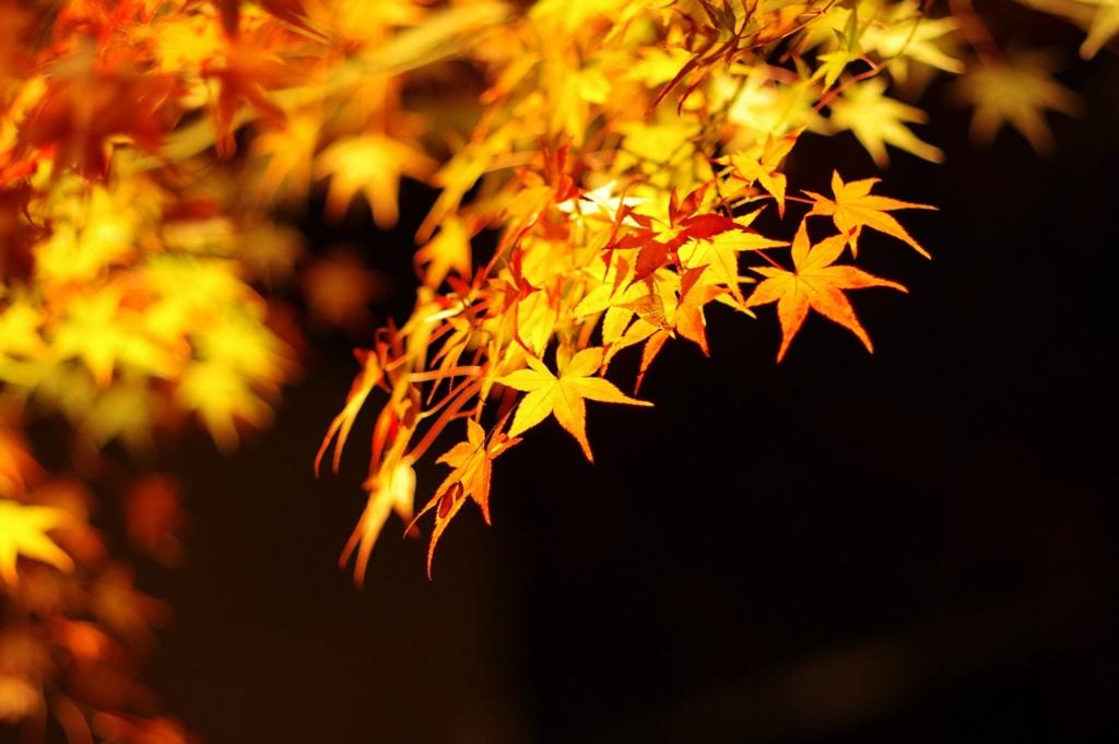 京都の紅葉人気穴場スポット
