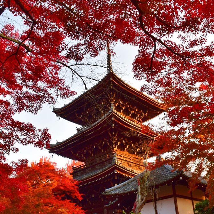 真如堂は京都のおすすめ穴場紅葉スポット