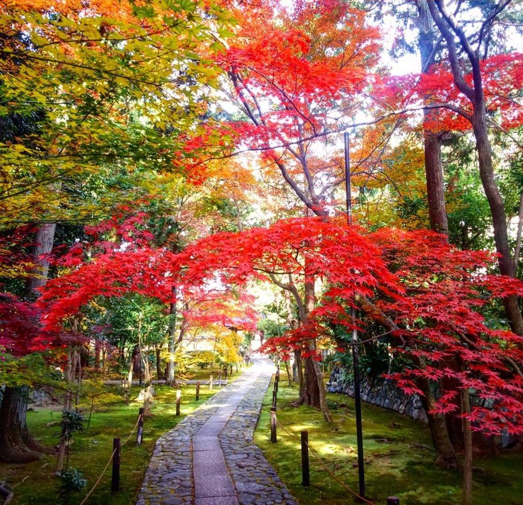 鹿王院は京都のおすすめ穴場紅葉スポット