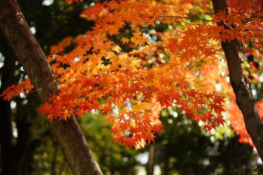 京都より奈良のほうが紅葉を楽しめるワケ