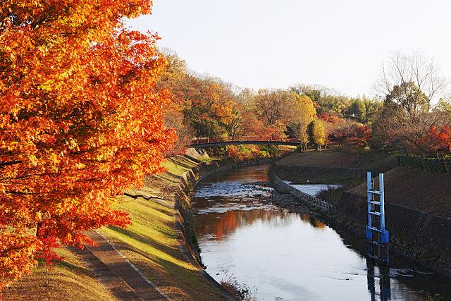 秋の奈良は紅葉の竜田川がおすすめ