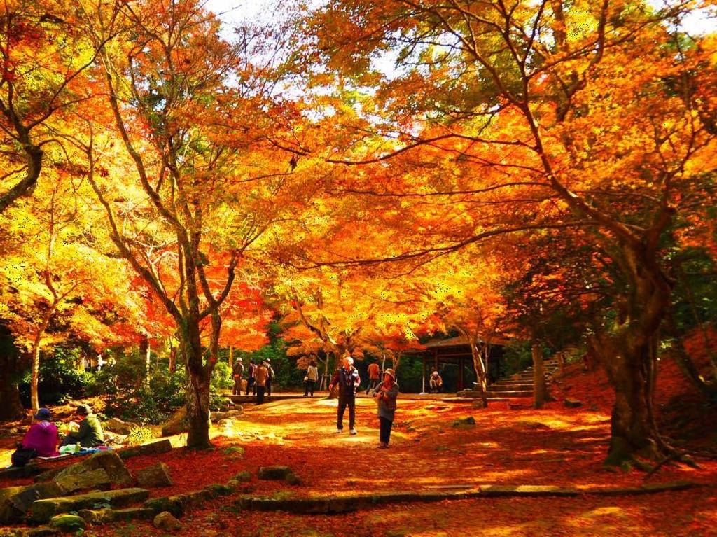 宮島の紅葉谷公園は赤の絶景