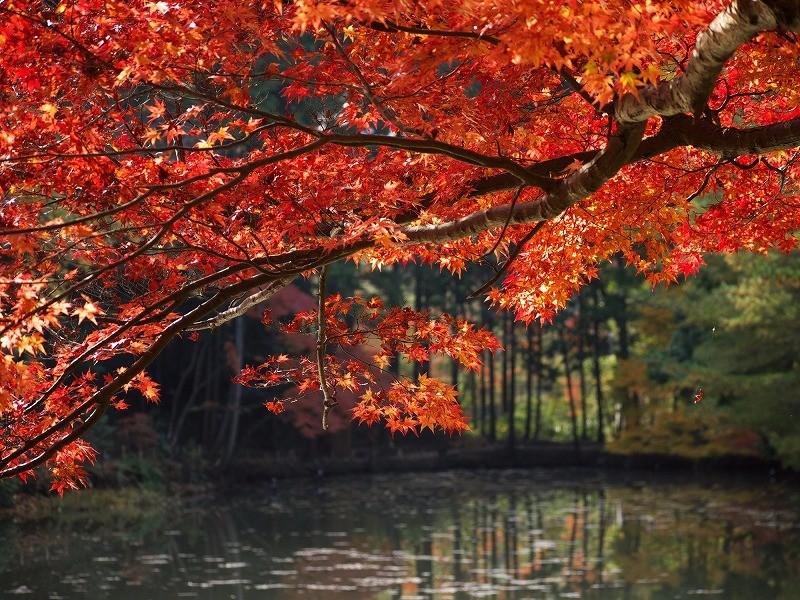 紅葉谷公園の紅葉が美しい本当の理由