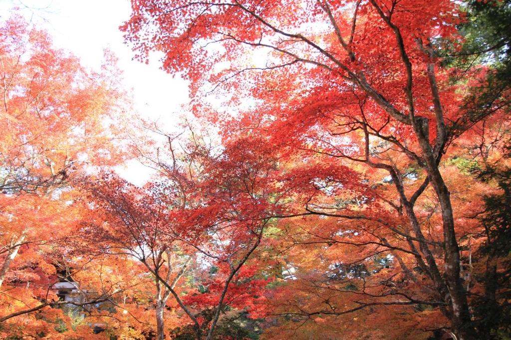 宮島の紅葉はもみじ歩道も見どころ