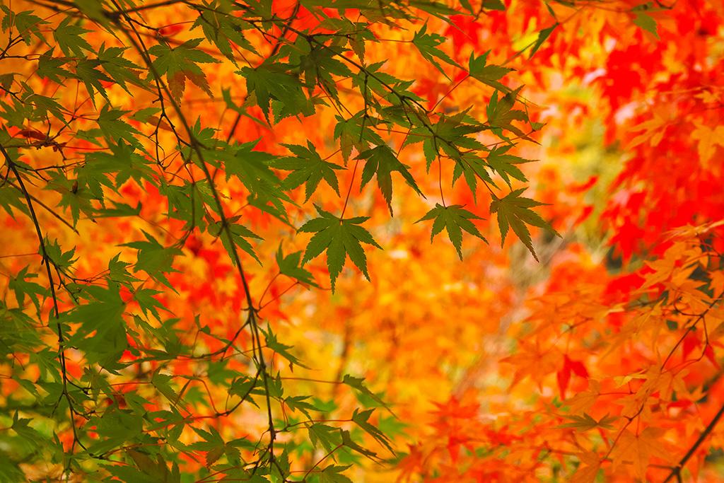 紅葉が楽しめる露天風呂のある温泉宿