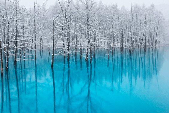 北海道の美瑛は冬がおすすめ