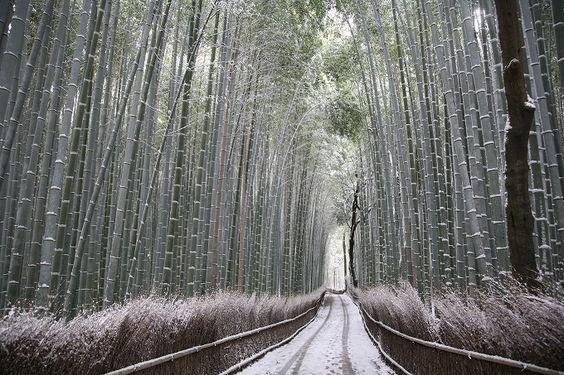 京都の嵯峨野は冬がおすすめ