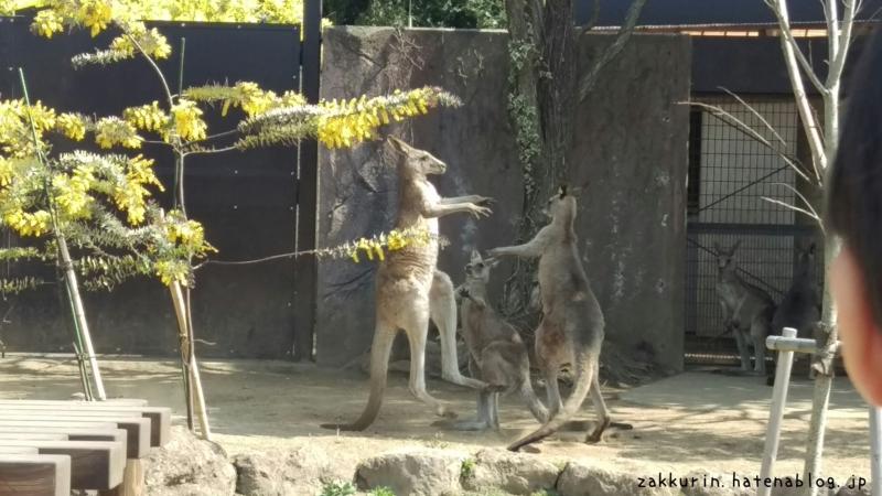 金沢動物園カンガルー