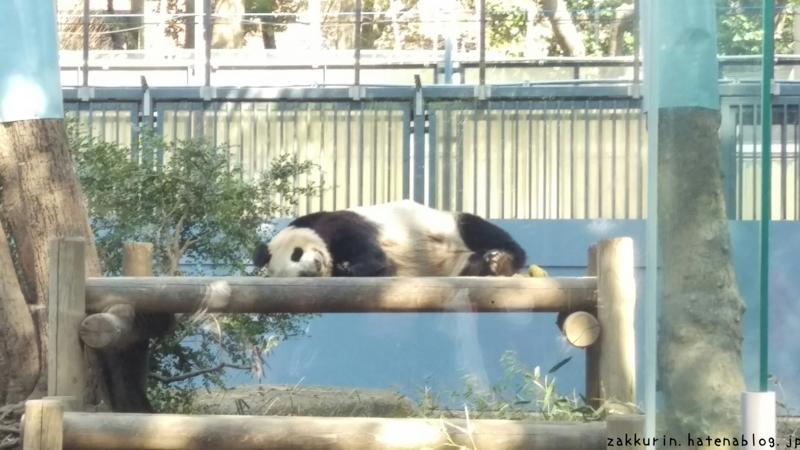 上野動物園ジャイアントパンダシンシン