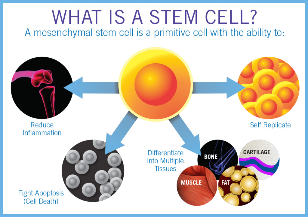 Find Out Best Stem Cell Therapy Hospital in India - Stem