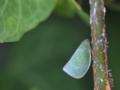 良く見る虫ですが、名前はサッパリ・・