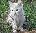 [animal][cat]