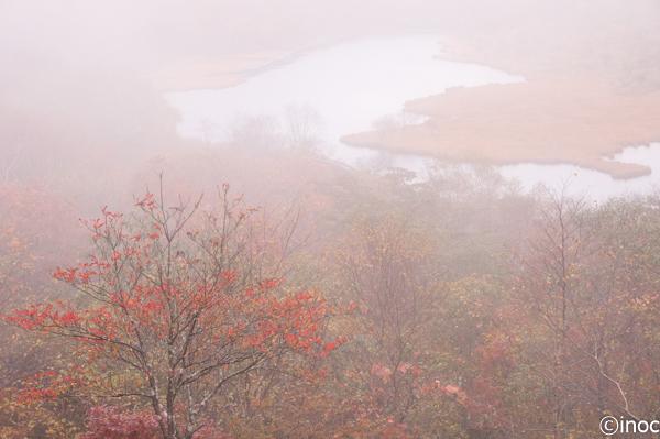 覚満淵 霧