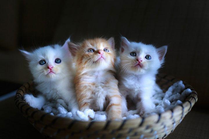 子猫三匹がカゴの中に入っている