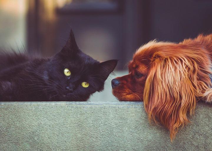 猫と犬が一緒に寝ている