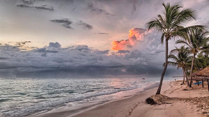 誰もいない浜辺のヤシの木に夕日が差す