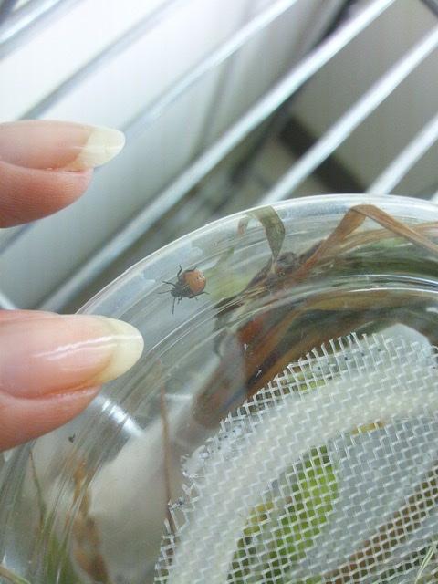 f:id:insectmania:20200830182032j:plain