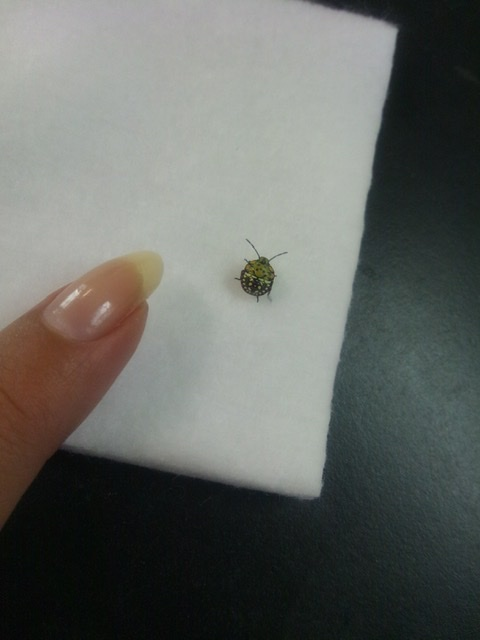 f:id:insectmania:20200830182047j:plain