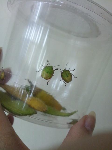 f:id:insectmania:20200830192110j:plain