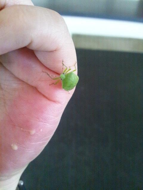 f:id:insectmania:20200830193245j:plain