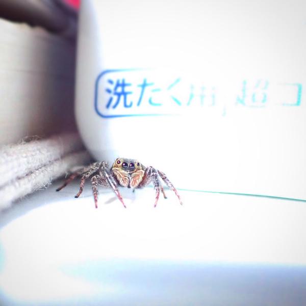 f:id:insectmania:20200910224706j:plain