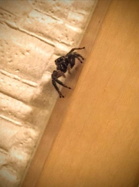 f:id:insectmania:20200910224744j:plain