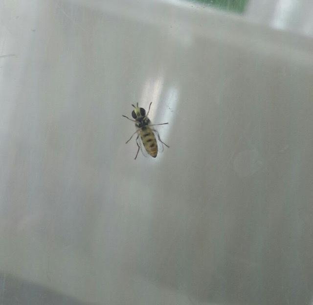 f:id:insectmania:20200913224138j:plain