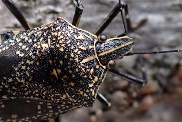 f:id:insectmania:20200920144842j:plain