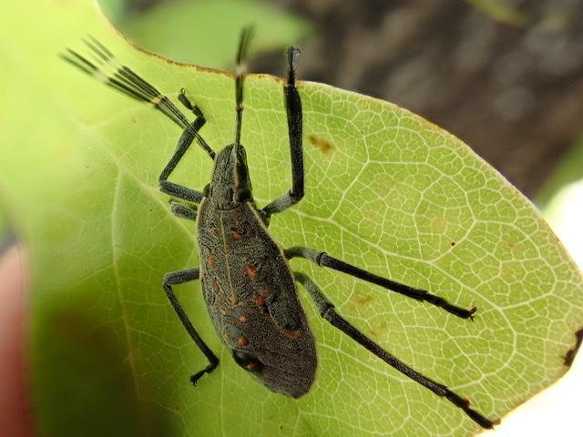 f:id:insectmania:20200920151831j:plain