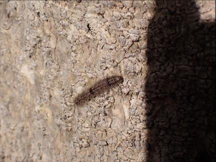 f:id:insectmania:20201025125925j:plain