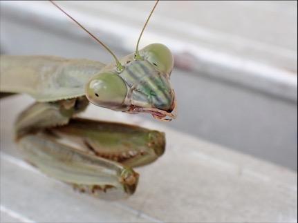 f:id:insectmania:20201025125937j:plain