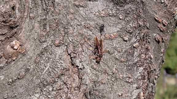f:id:insectmania:20201029220721j:plain