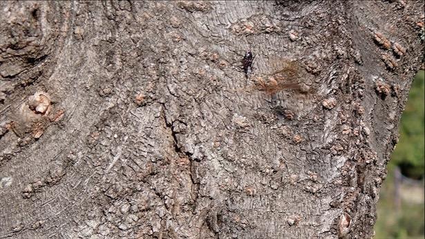 f:id:insectmania:20201101183850j:plain
