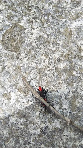 f:id:insectmania:20201101184333j:plain