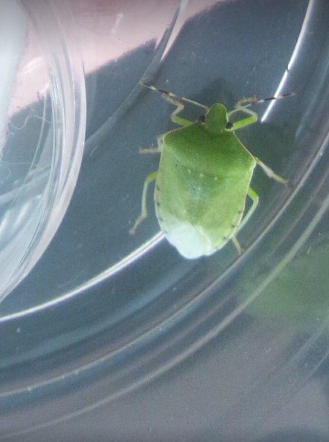 f:id:insectmania:20201130001210j:plain