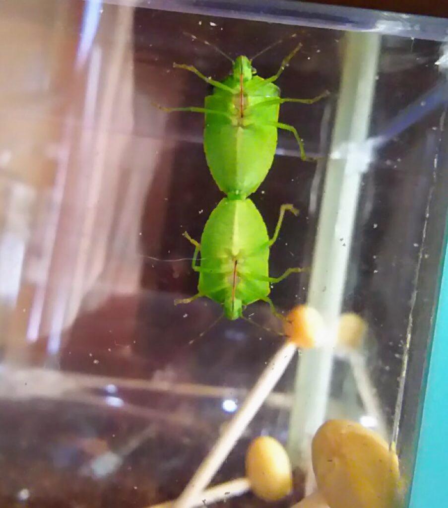 f:id:insectmania:20210210123555j:plain