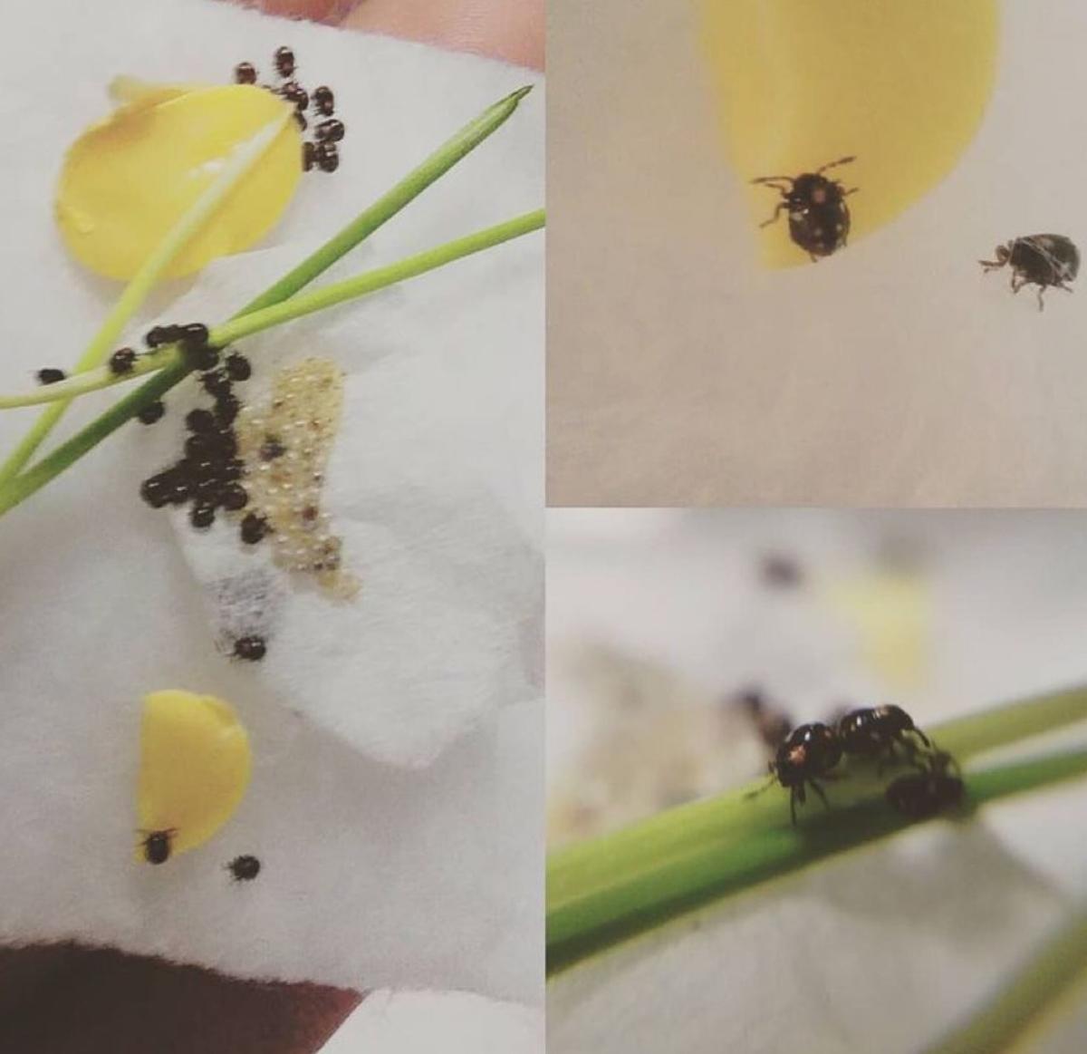 f:id:insectmania:20210214213607j:plain