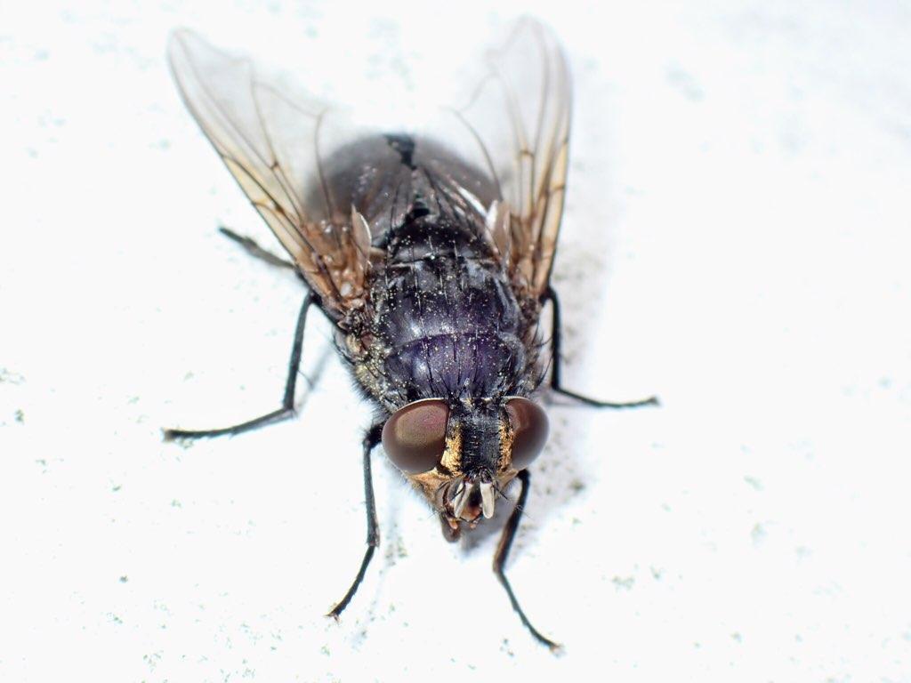 f:id:insectmania:20210219133301j:plain