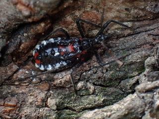 f:id:insectmania:20210328121230j:plain