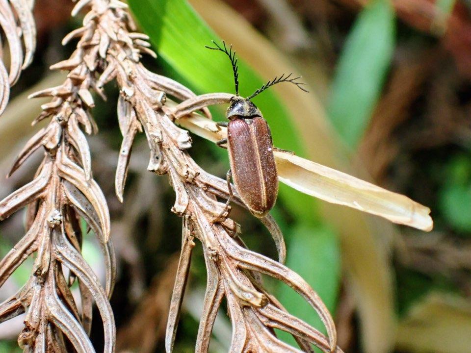 f:id:insectmania:20210418094451j:plain