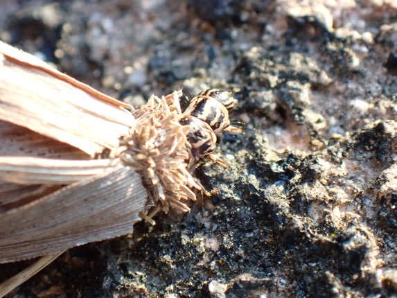 f:id:insectmania:20210616124037j:plain